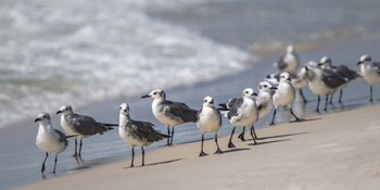 What's Up Gulls by Danny Head art print
