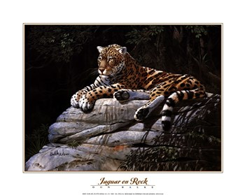 Jaguar on Rock by Don Balke art print